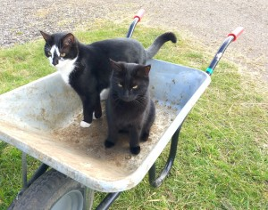 Yard cats - Mitsy & Smudge